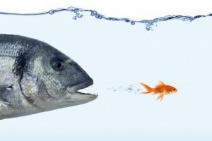 Fish in danger